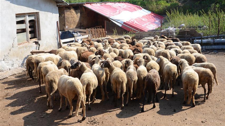 И днес, в ямболското село Шарково, ще се евтаназират животни