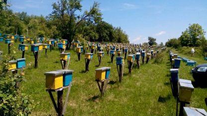 Част от пчелините на
