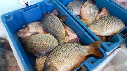 Риба на видинския пазар