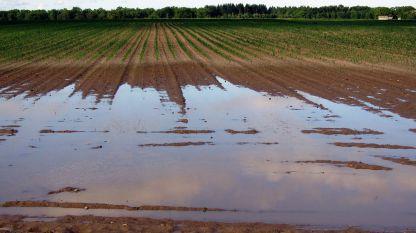 Наводнени ниви
