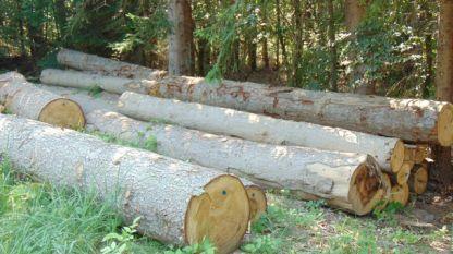Трудно е да се борим с незаконната сеч, ако няма сигнали на бдителни защитници на българските гори