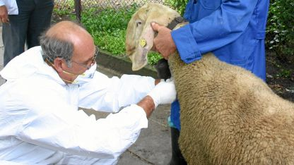 Към момента само една овца в стадо на частен стопанин е с положителен резултат.