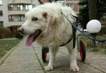 Снимка:DOG Help - BG