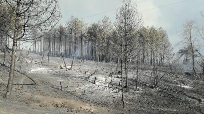 Горски територии, унищожени от големия пожар в Пирин