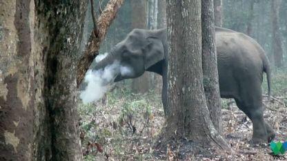 """Кадър от видеозаписа с """"пушещата"""" слоница."""