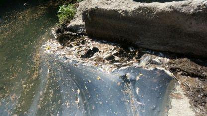 Мъртвата риба е само едно от последствията от замърсяването на реките