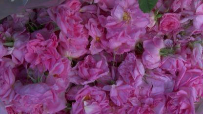 Произшествията намалели най-много - с 64%, с аромата на рози.