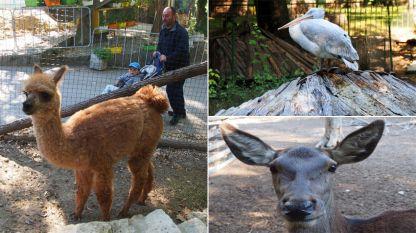 Зоопаркът във Варна