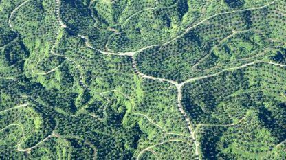 Новозасадени палмови плантации на ръба на национален природен парк в Индонезия
