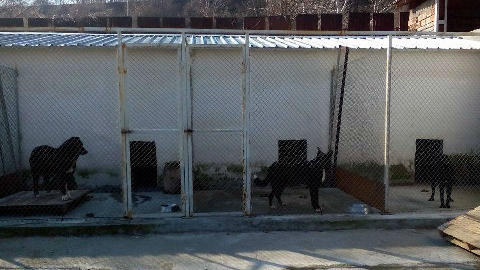Приют за кучета - Благоевград