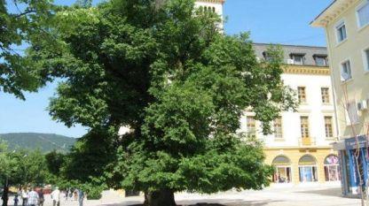 Стария бряст в Сливен