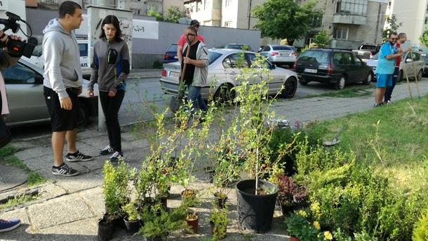 Засаждане на дървета в Кюстендил  Снимка: Кирил Фалин