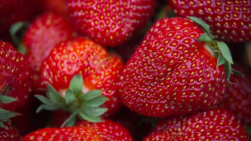 След Австралия, заплахата за заразяване на ягоди се разпространи и