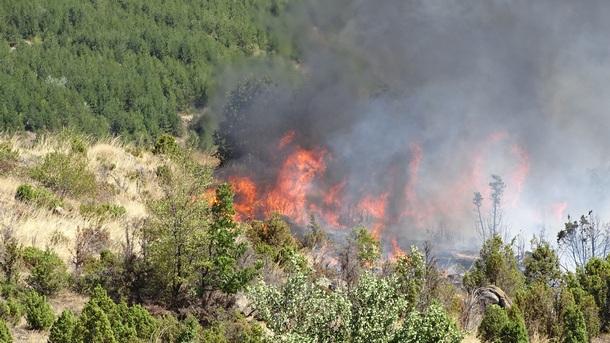 Агенцията по горите започва масирана информационна кампания за превенция на