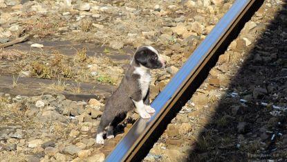 Животни – железничари