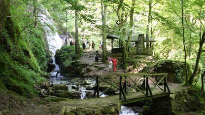 """На територията на Национален парк """"Централен Балкан"""" се намира единствената гора с изцяло естествен произход в Европа. Тук се намира и най-обширния за Европа защитен масив от стари букови гори."""