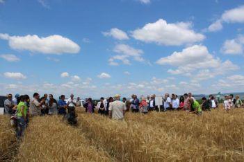 Участниците в открития ден посетиха и опитни полета на Института по земеделие