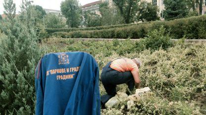 Озеленяването е един от секторите, в които се ангажират безработните.