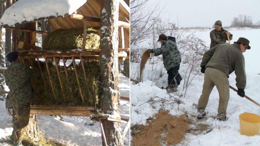 Грижи за дивеча през зимата
