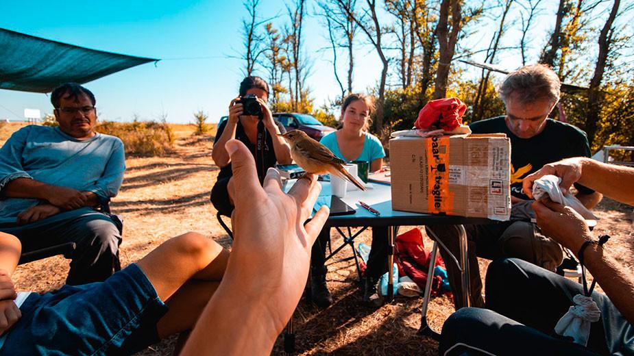 Доброволците в лагера и Патрик Бергкамп в процес на измерване, описване и освобождаване на птиците.  Фотограф: Виктор Джаков
