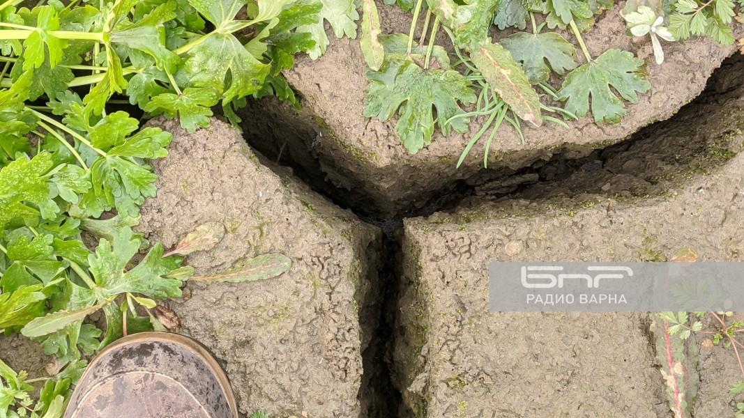Процепите в дъното на речното корито са дълбоки поне 15 см.