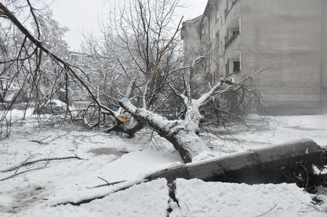 Паднало дърво във Видин. Снимка БТА