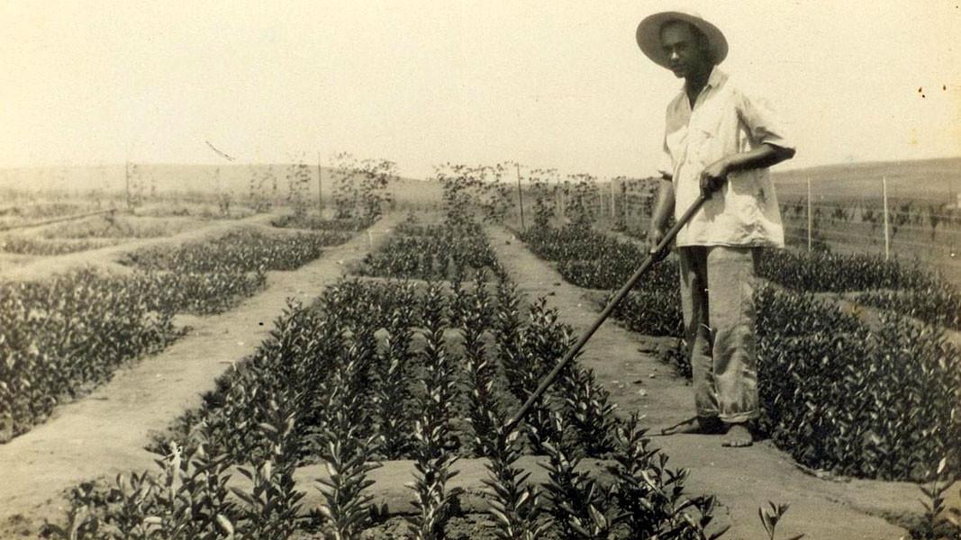 Fshati gjatë viteve të para – mbjellja e kopshteve