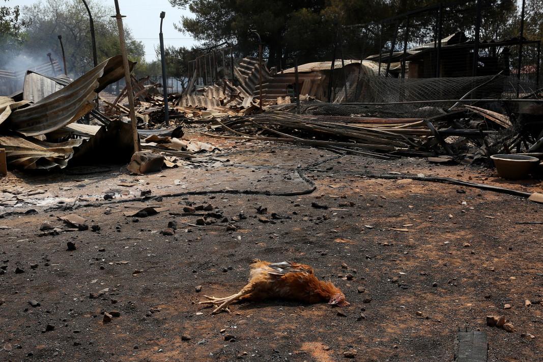 Опожарен двор след горския пожар в района на Варибоби, североизточно предградие на Атина, 4 август 2021 г.