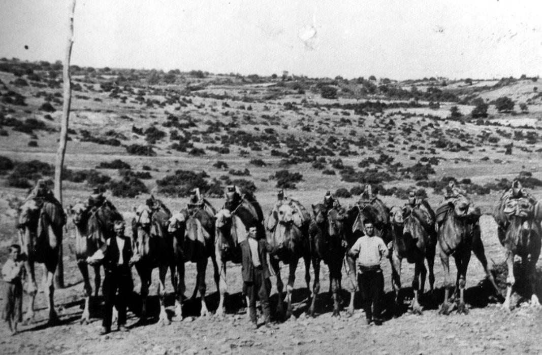 Тополовградски камилари 1936 г.