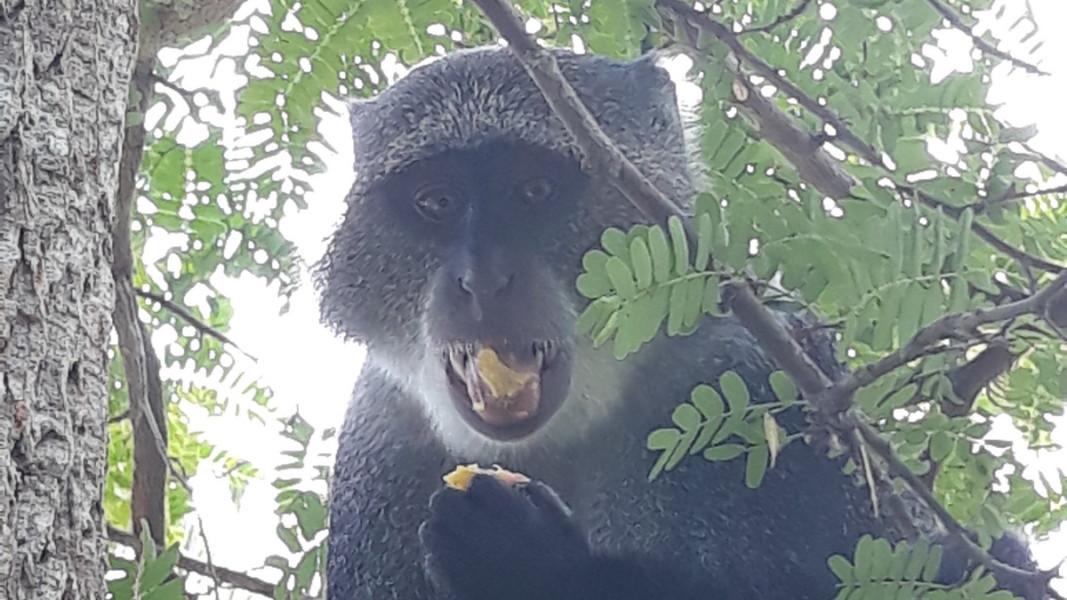 В джунглата на парка Джозани с маймуни, костенурки на 200 години, мангрова растителност и лечебната сила на билките   Снимка: Славена Илиева