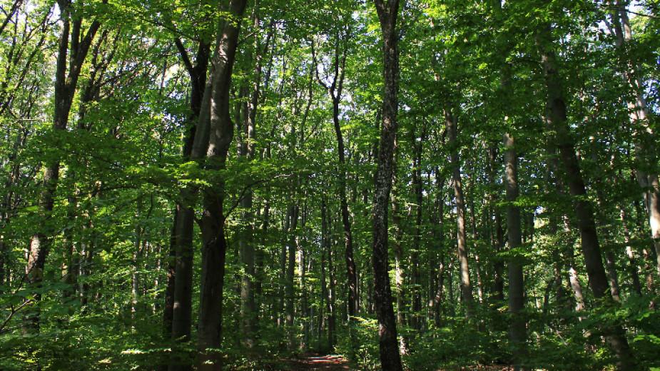 Няма кандидати за половината от местата за горски инспектори за