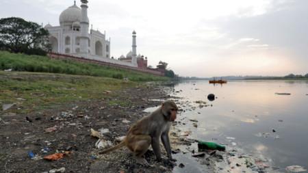 Маймуни често бродят из комплекса Тадж Махал в Северна Индия, а напоследък те нападали и туристи.