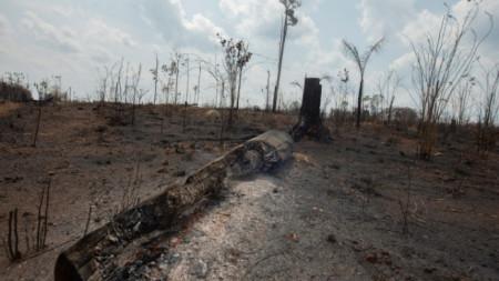 Изгорели площи в Амазония