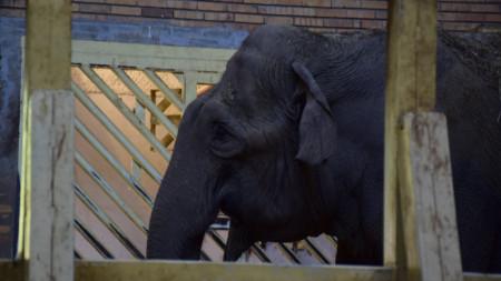 56-годишната Артайда от столичния зоопарк