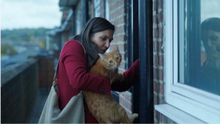 Покрай котката лентата поставя редица въпроси и проблеми от съвремието ни
