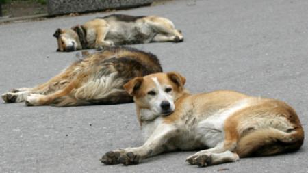 Бездомните кучета почиват в обществените пространства на Плевен в очакване на новия приют