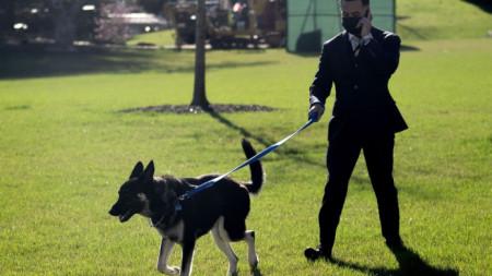 Служител на Белия дом разхожда Мейджър по южната ливада.