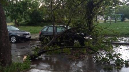 Автомобил е затиснат от паднало дърво в района на Гара Искър в София