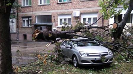 Паднал клон върху кола в сръбския град Зренянин.