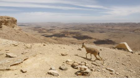 Наводнения в пустинята - това необичайно явление може да бъде особено опасно за неподготвени групи и водачи.