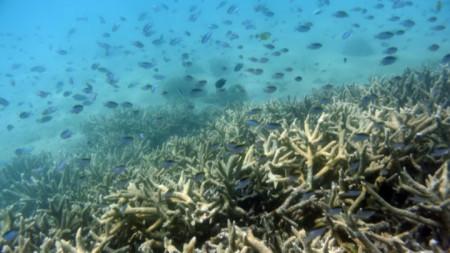 Коралов риф край Австралия