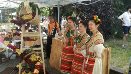 The holiday of cherries takes place in Kyustendil for the 14th time