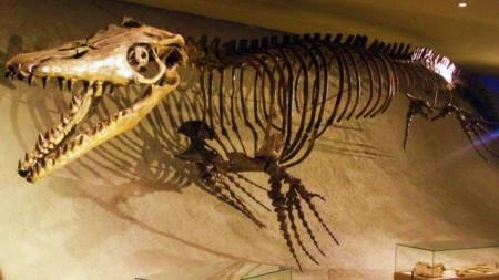 Скелет на мозазавър в музея в Маастрихт