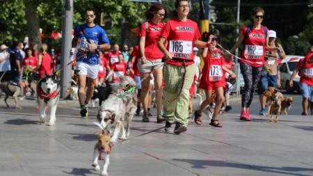 """Маратон за кучета и стопаните им бе една от проявите в рамките на инициативата """"Живей активно"""" днес в София."""