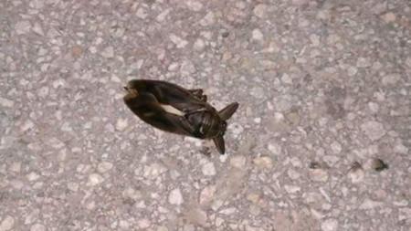 Мъртва риба в река Марица