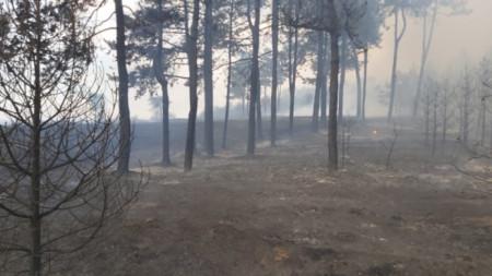 Пожарът в Хасковско