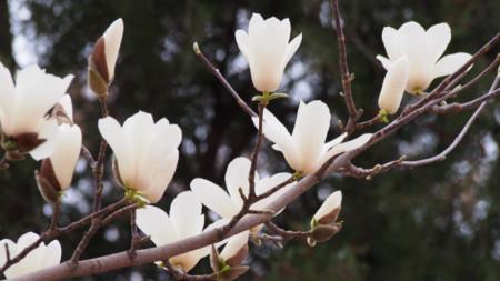 Цъфтежът на различни растения е в основата на сезонния алергичен ринит.