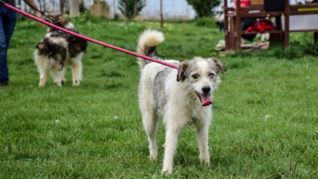Кучета от приюта в Горни Богров