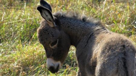 Министерството на земеделието и храните в Гърция изпрати инструкции как да се използват магаретата