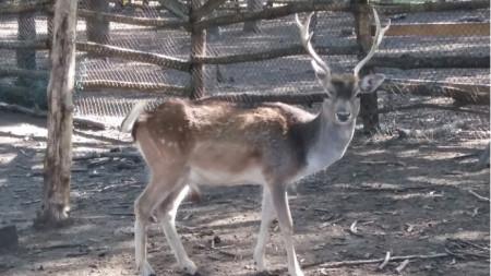 Един от обитателите на зоопарка